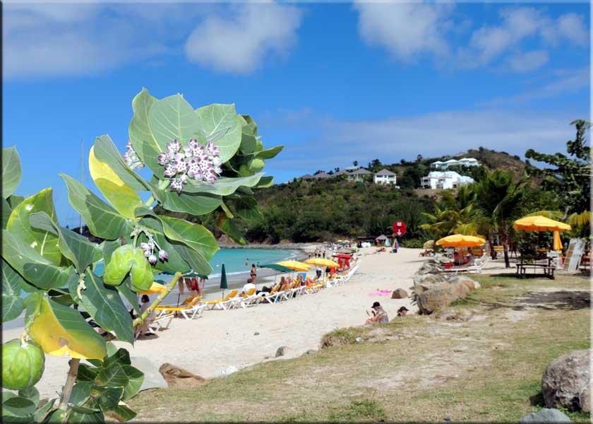 Dreams Beach Bar Restaurant Sint Maarten St Martin